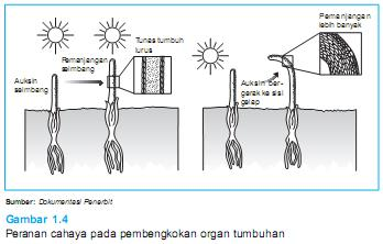 faktor eksternal tumbuhan